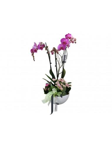 Orquidea romántica