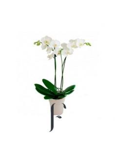 Orquidea con cerámica