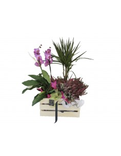 Cesta de plantas con orquideas